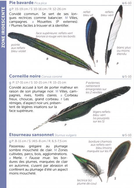 excellent quality save up to 80% so cheap Miniguide 74 : Identifier les plumes